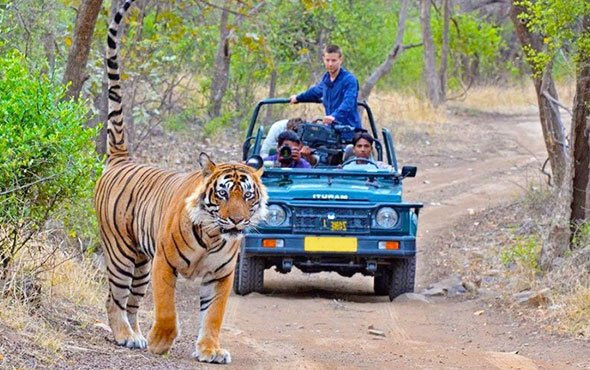 """Best wildlife safari in uttrakhand"",""top wildlife safari in uttrakhand"",""wildlife safari in uttrakhand"",""top safari in uttrakhand"", ""best safari in uttrakhand"",""Camping in jim corbett"",""Uttrakhand Birding tour in jim corbett"",""Jungle safari in jim Corbett"", ""jeep safari in jim corbett"",""best jungle safari in uttrakhand"",""birding tour in uttrakhand"