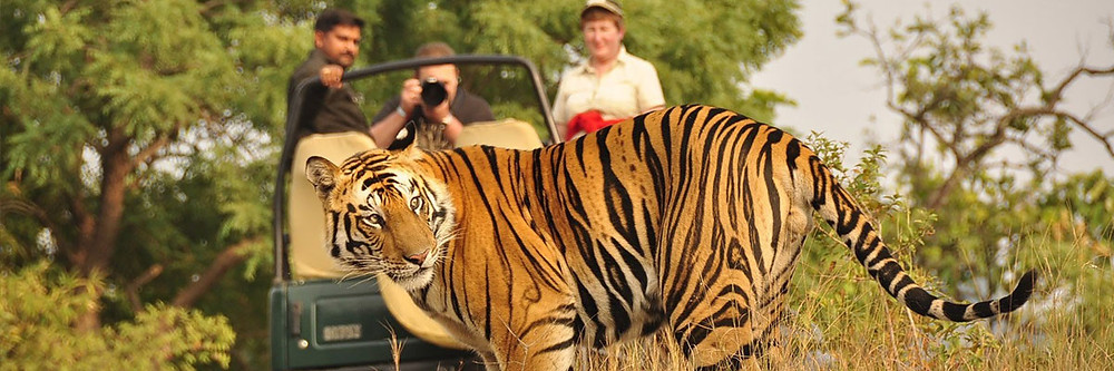 """Best wildlife safari in uttarakhand"",""top wildlife safari in uttarakhand"",""wildlife safari in uttarakhand"",""top safari in uttrakhand"", ""best safari in uttarakhand"",""Camping in jim corbett"",""Uttarakhand Birding tour in jim corbett"",""Jungle safari in jim Corbett"", ""jeep safari in jim corbett"",""best jungle safari in uttarakhand"",""birding tour in uttrakhand"""