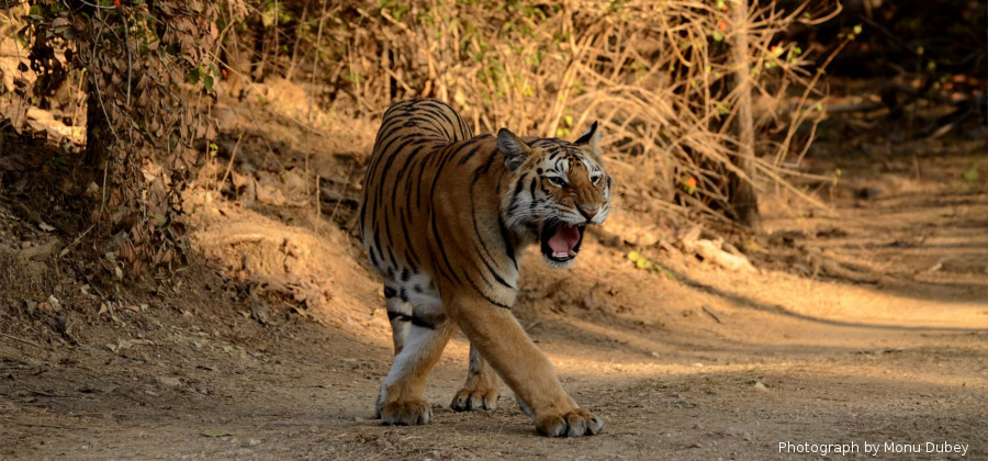 Wildlife Safari in Uttrakhand