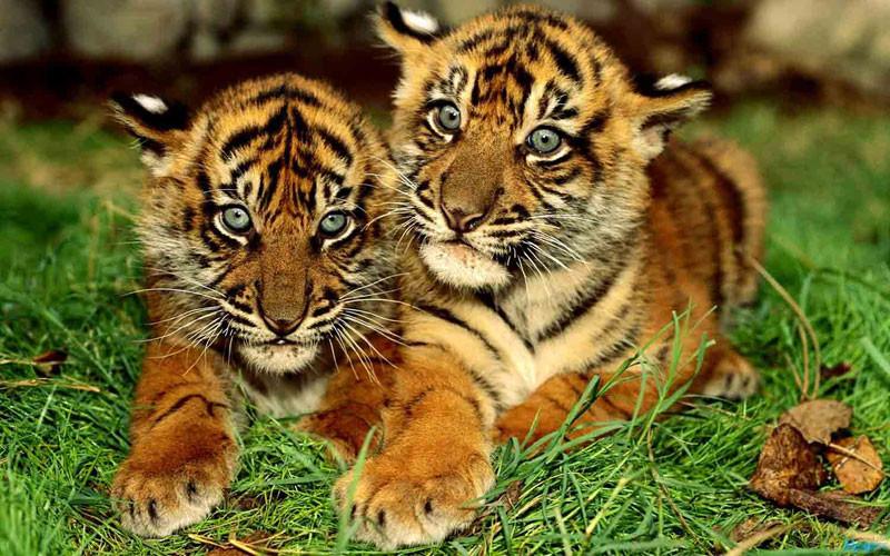 """""""Best wildlife safari in uttrakhand"""",""""top wildlife safari in uttrakhand"""",""""wildlife safari in uttrakhand"""",""""top safari in uttrakhand"""", """"best safari in uttrakhand"""",""""Camping in jim corbett"""",""""Uttrakhand Birding tour in jim corbett"""",""""Jungle safari in jim Corbett"""", """"jeep safari in jim corbett"""",""""best jungle safari in uttrakhand"""",""""birding tour in uttrakhand"""""""