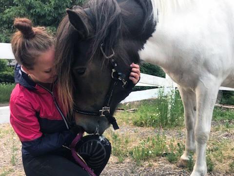 Islandsk hest i fol