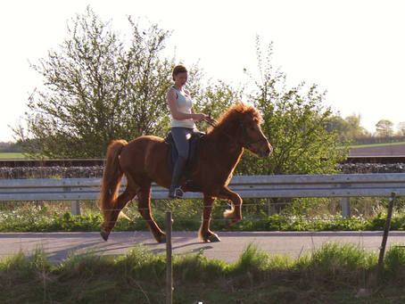 Blog: Hvorfor er det så vigtigt at få sin hest masseret?