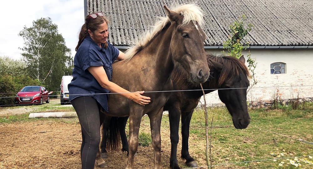 Sussi Glistrup med to unge islandske heste