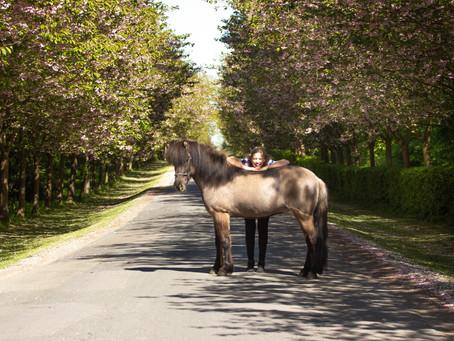 Blog: Passioneret hestepige med masser af drømme, fritidsviking og hestemassør