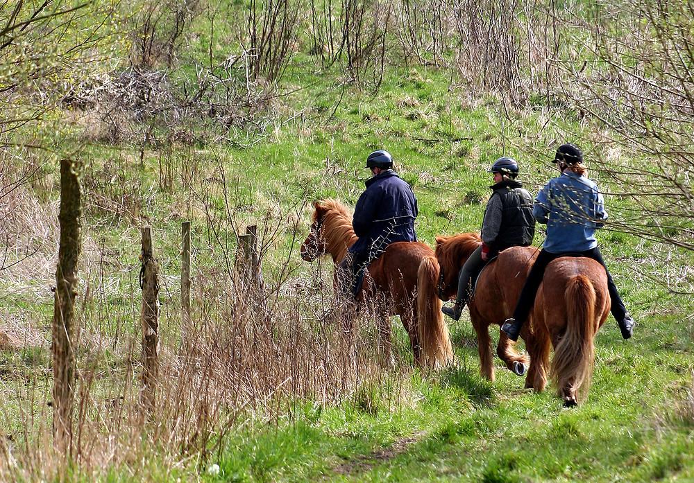 Heste i naturen.