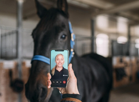 Nu kan du få gratis dyrlægehjælp via mobilen
