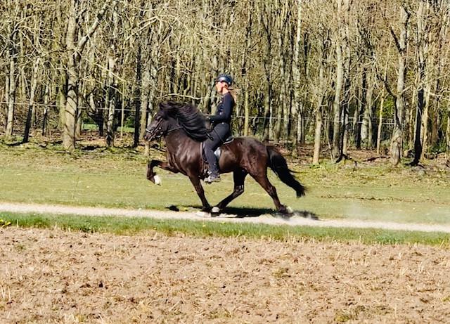Amalie Møller-San Pedro på islandsk hest i tölt