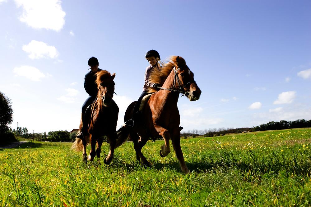 Glade ryttere på islandske heste