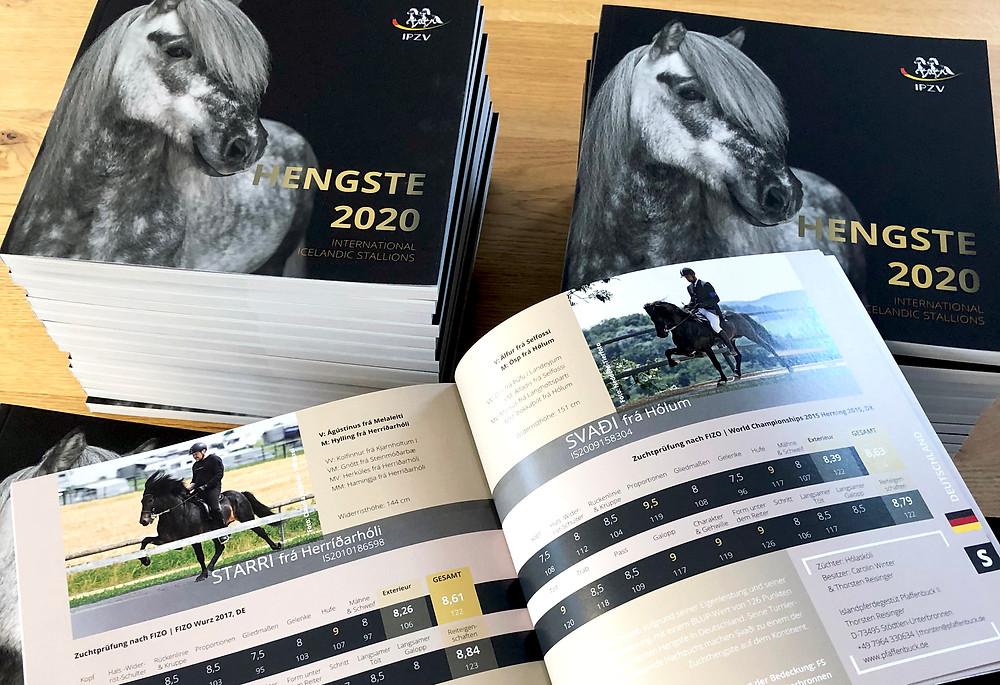 HENGSTE - International Icelandic Stallions