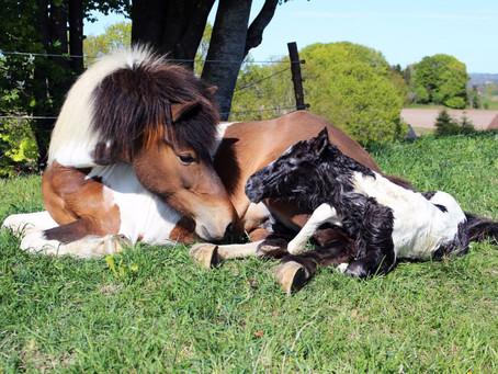 Årets mest populære hestenavne