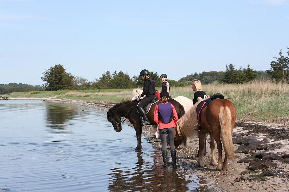 Islandske heste med ryttere ved sø
