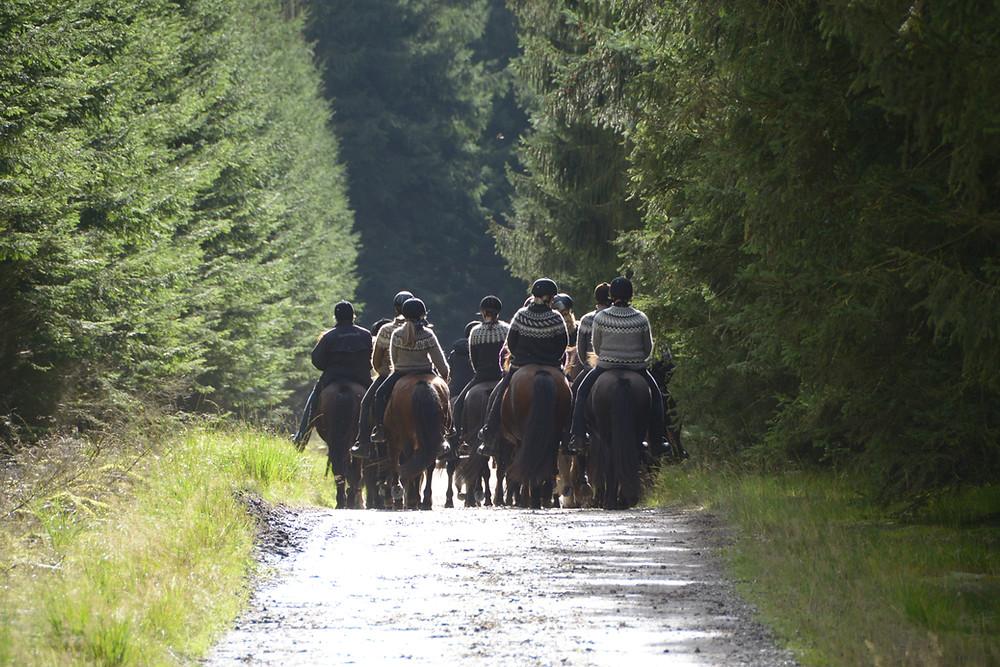 Ryttere på islandske heste på ridetur i skoven.