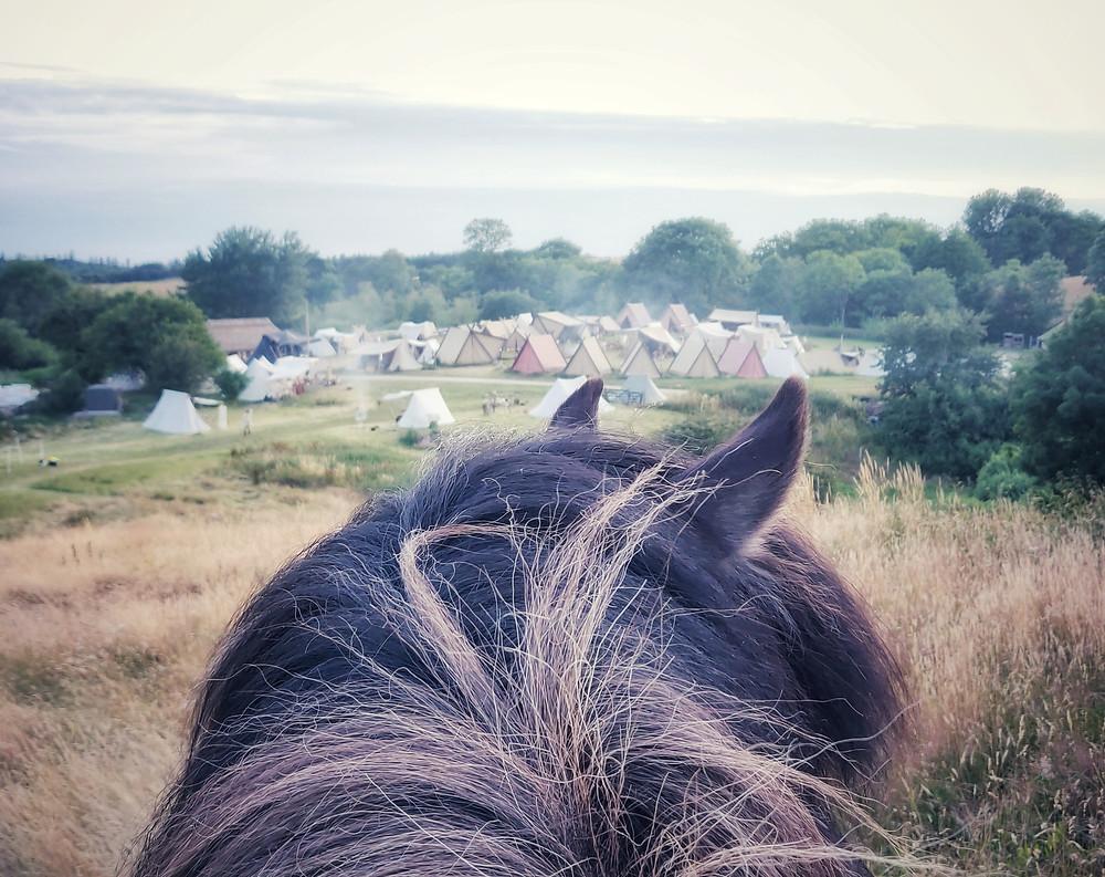 Islandsk hest på vikingemarked