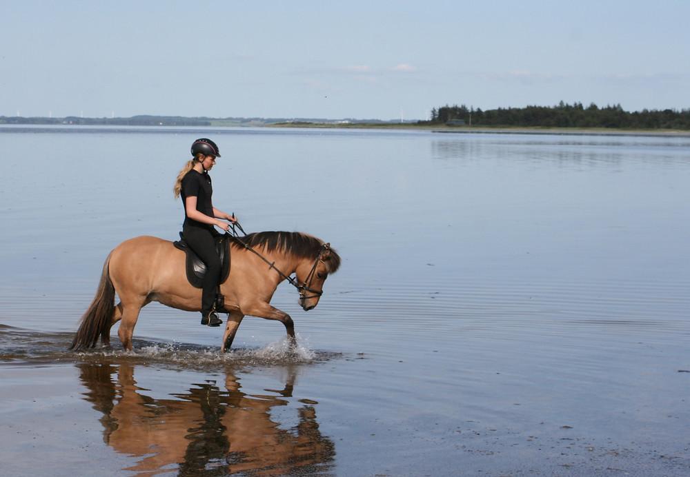 Rytter på islandsk hest i vandet