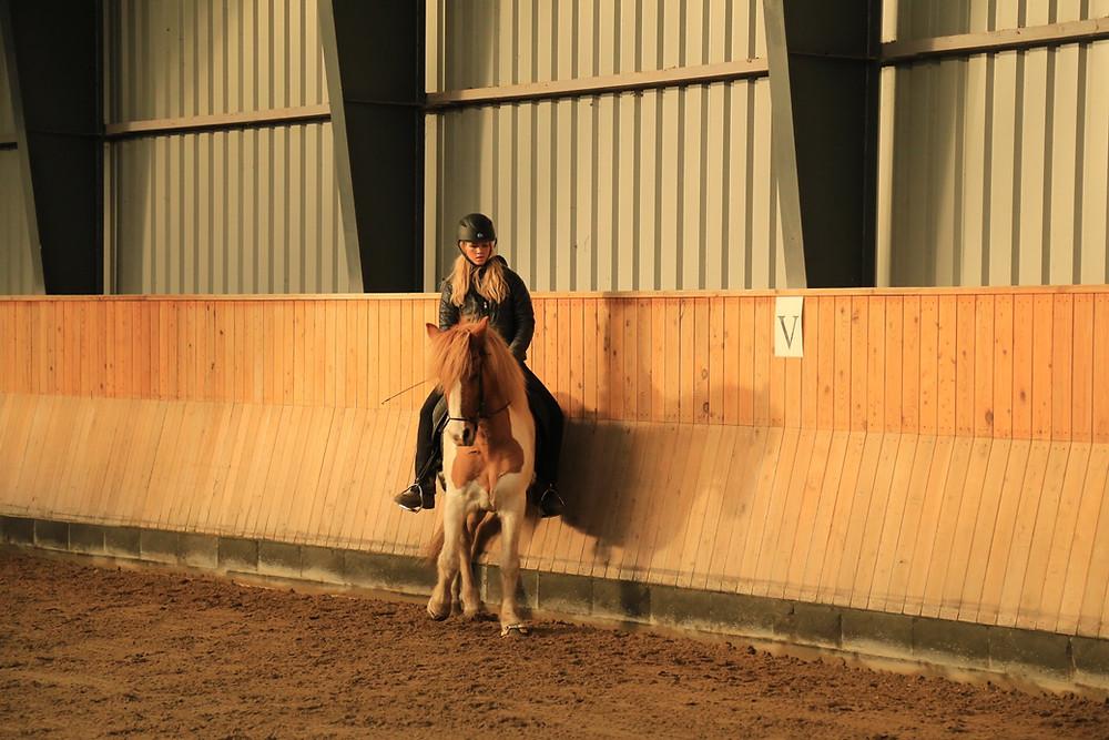 Versade på islandsk hest