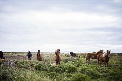 horses-593163.jpg