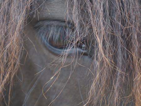 Fælles udmelding om hesteherpes