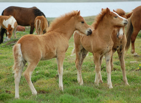 Hvad er CEM hos heste?