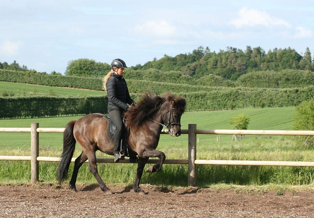 Fifla-blogger Sine Damm Bak på islandsk hest.