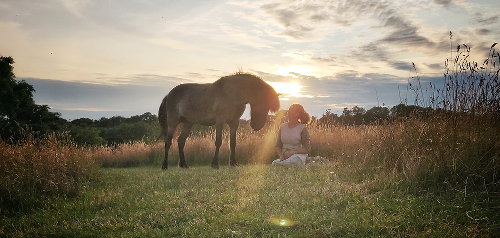 Islandsk hest i solnedgang
