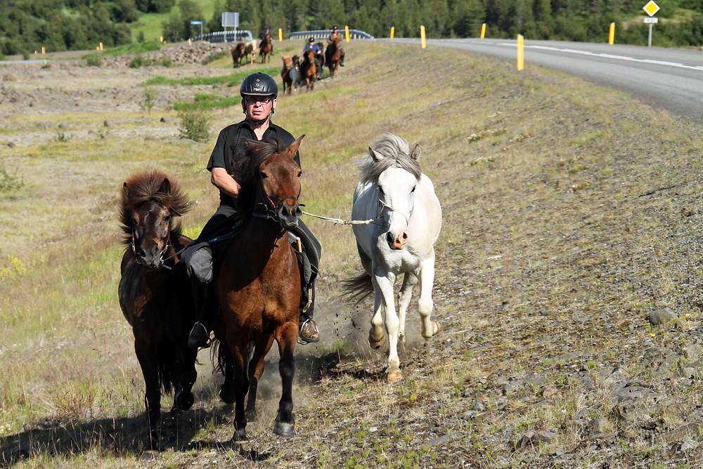 Rytter på islandsk hest
