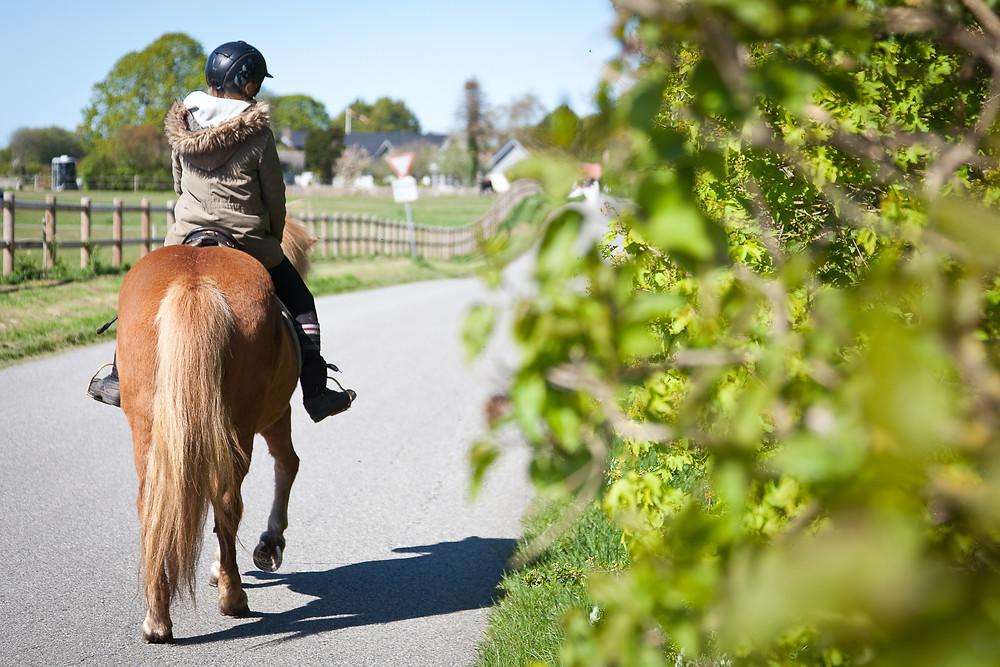 Ung rytter på islandsk hest.