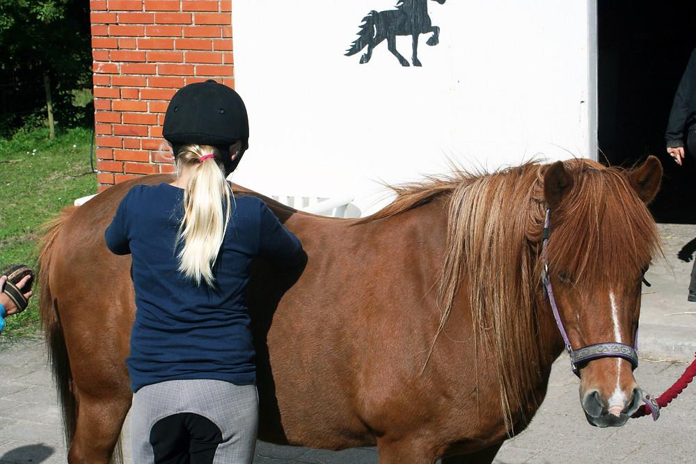 Pige med islandsk hest