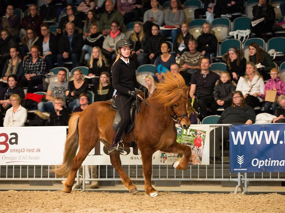 Rytter på islandsk hest til Hillerød Horse Show