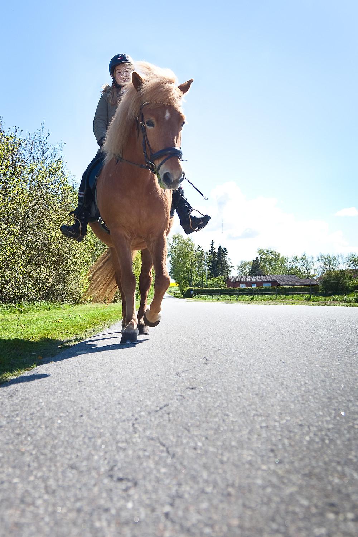 Rytter på islandsk hest.