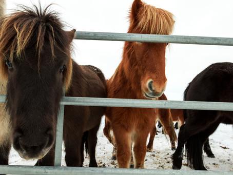 Hvad er din hests horsenality?