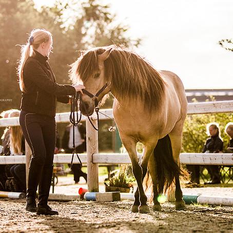 Kan du høste rosetter for god horsemanship?