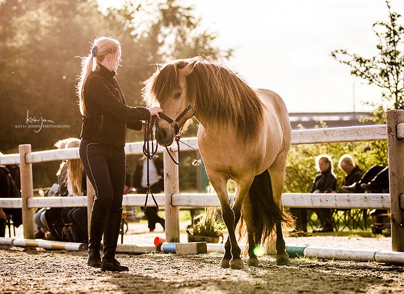 Julie Keller horsemanship med islandsk hest