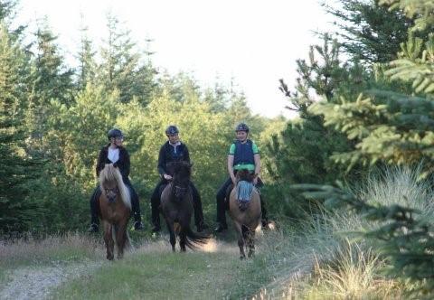 Tre generationer til hest, Hjardemål Plantage.