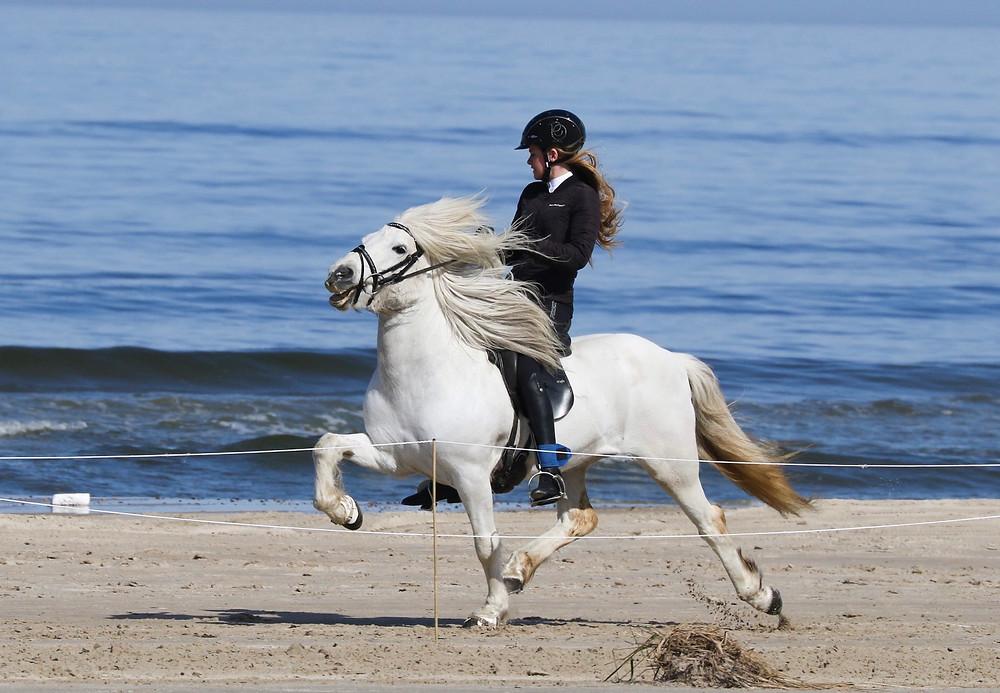 Islandsk hest på stranden