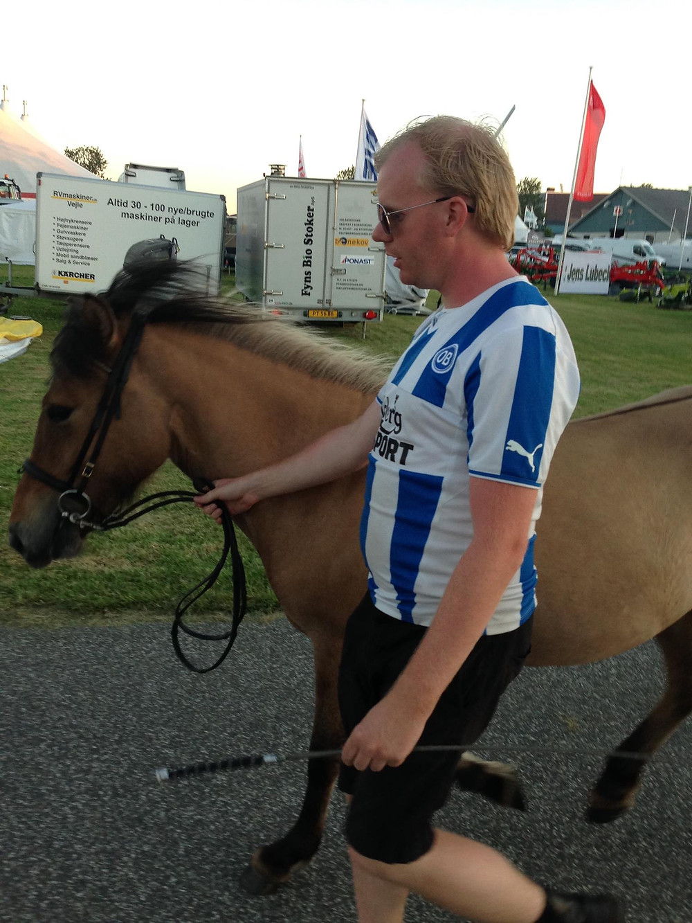 Islandsk hest til dyrskue