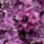 charlotte-coneybeer-669261-unsplash.jpg