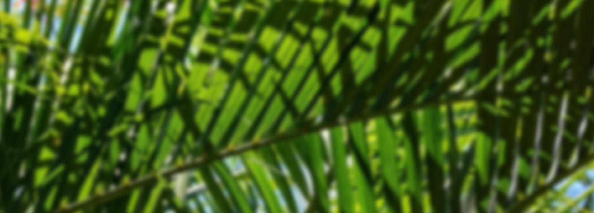 Ce vert,cette nature est un clin d'oeil à l'île dont est originaire NjieTRENDS