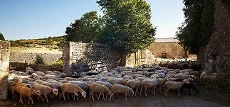 En Languedoc Hérault et Gard