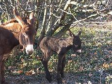 Serane randonnées avec un âne en Languedoc-Roussillon