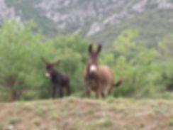 Randonnée âne, Garrigues