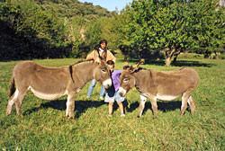Nos ânes ont besoin de compagnie comme chaque année dès les premiers beaux jours.
