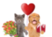Cat and dog with heart shaped balloon, g