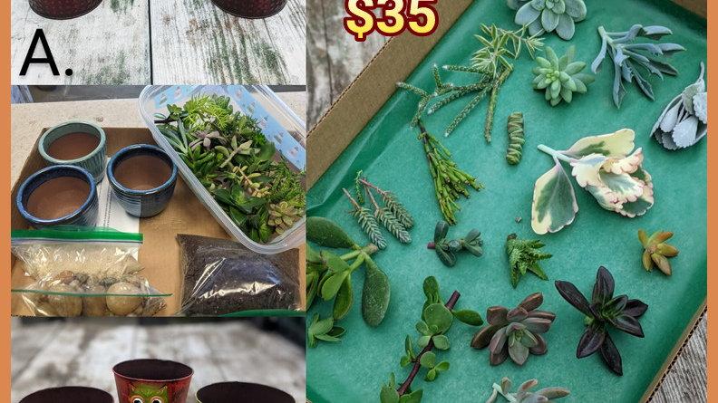 Fall D.I.Y. Succulent kit