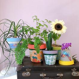 Colecao aviamentos com plantinhas