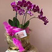 Ovo dourado com orquidea pink por pascoa