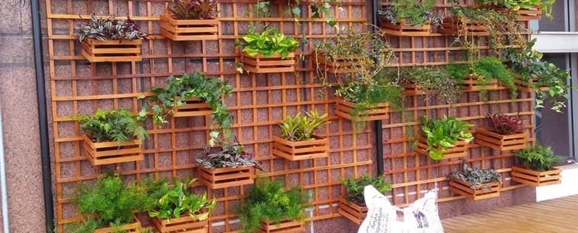 Construçao, entrega e cuidado de parede vegetal