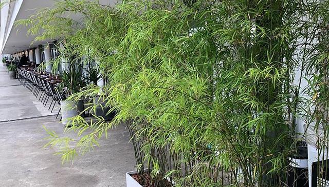 Cerca de bambu em jardineira super leve