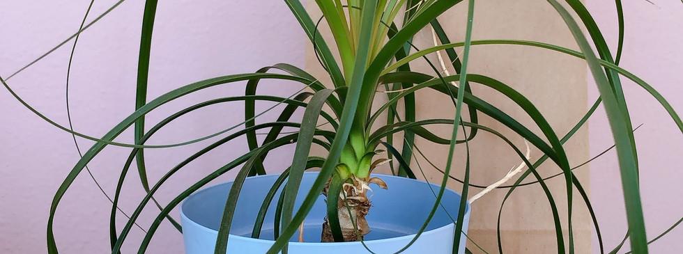 Arranjo coleçao aviamentos com planta M