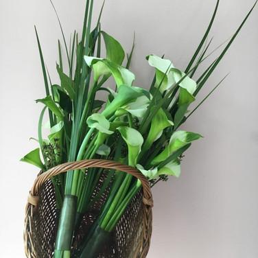 Bouquet de callas para festival de tango
