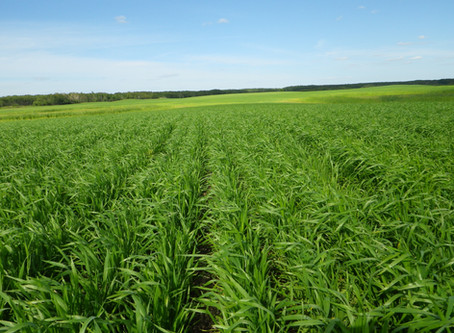 Benefits of Variable Rate: Water, Nitrogen, and Technology